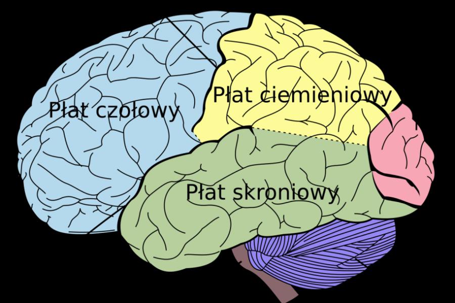 Co mówi mózg Twojego klienta i jak to odczytać?